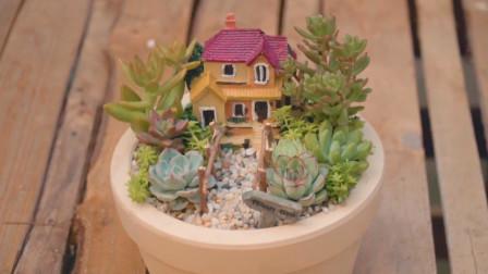 植树节手植春色,DIY萌趣3款多肉盆栽, 让你的窗台美出新高度