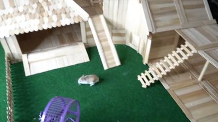 国外宠主给小仓鼠,打造冰淇淋棍豪宅,可结果没让人想到