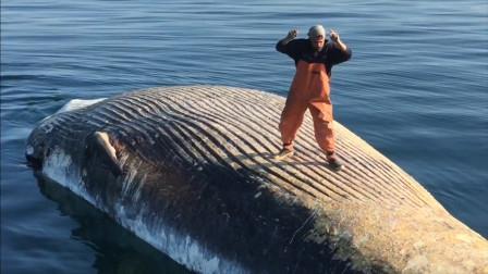 作死老外在鲸鱼后背跳舞,一开始很帅,一分钟后发生意外