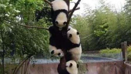 """不一样的体验!重庆动物园开启在线直播,市民可以随时""""云""""观赏"""