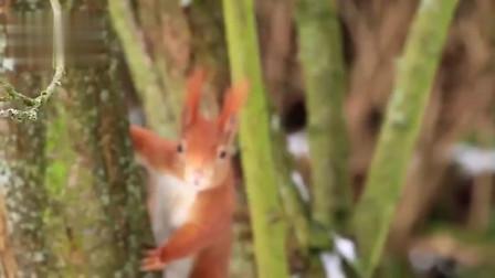这种松鼠名字虽然叫魔王,但人家其实是个软萌的小可爱!