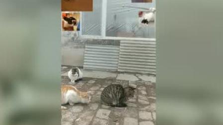 新型冠状病毒 猫咪咳嗽怎么回事
