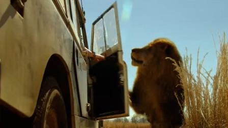 《困兽》第一集:非洲狮组队猎人类,15人的旅游团仅一人幸存
