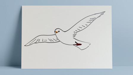 海鸥2窦老师教画画