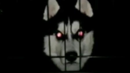 """传说中的"""" 微笑狗 """" 晚上勿看!"""