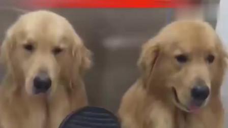 主人给狗狗说家规,接下来这一个个的小表情真是没谁了