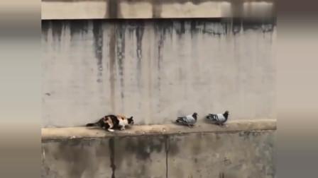 都说猫的反应速度有多快,我怎么不觉得呢?