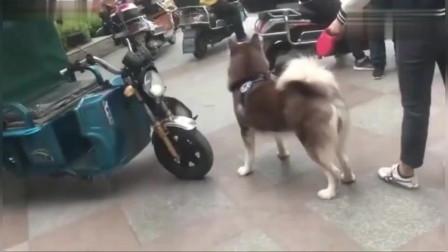 狗子:主人你终于来了,这下我可以不怂了!
