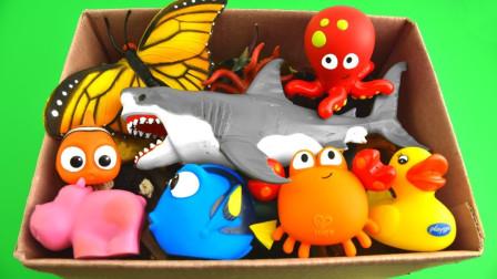 动物世界:超精彩!今天小熊丹丹姐姐分享的动物你都认识吗?