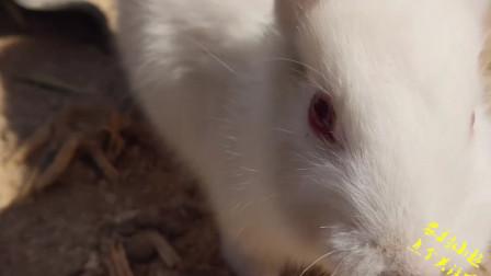 可爱的小兔兔在喝水,居然掉进喝水的容器中,把小短腿都弄湿了