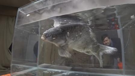 把活鱼丢进零下180度的液氮里,6秒后是什么下场?看完你就明白了