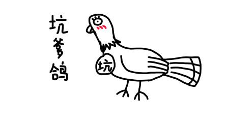 """从前有一只鸽子叫""""坑爹鸽"""""""