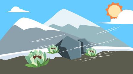 同学们,在雪山上的盛开的雪莲花为什么不怕冷?