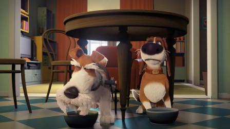 疯狂假期:轮椅狗竟把烤糊的吐司当做人间美味,口味真独特!