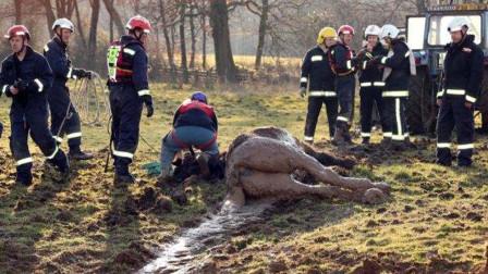 这匹马不幸落难,被救援人员就出来后,接下来的举动太有灵性了
