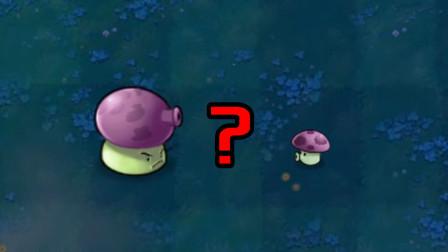 大喷菇和小喷菇之间有什么关系?