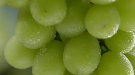 舌尖上的美食:品尝阳光玫瑰葡萄,果子一个比一个大,这水灵灵的看得太馋了