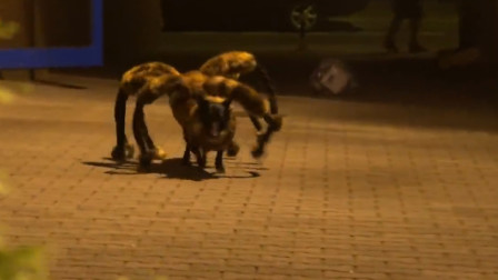 小伙给狗穿上蜘蛛服,路人吓得狼狈逃跑,镜头拍下搞笑过程!