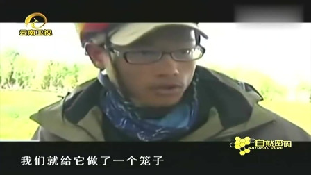 流浪狗意外跟随骑行队,经历各种恶劣天气,征服了青藏高原