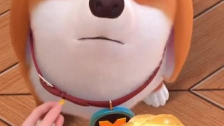 飞狗MOCO:为了一口奶油面包,柯基太有心机了