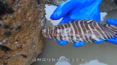 妹子赶海抓到深海物种,这种海鲜真是太罕见了