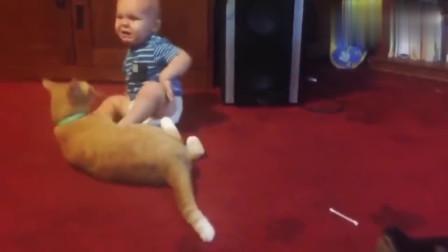 熊孩子跟猫咪打架:谁才是家里的小祖宗,一决胜负吧!