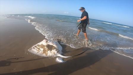 """男子钓到""""魔鬼鱼"""",在沙滩不停地挣扎,走近一看发现惊喜"""