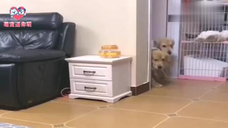 狗狗饿了喊主人做饭,下一秒看到女主人的新发型就饱了:想吐!