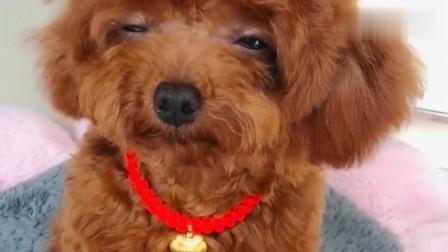 一只超级委屈的狗狗,这小声音真是醉了,哈哈