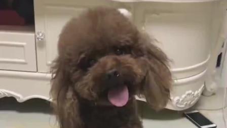 一只犯错误的狗狗,主人教训它,这表情真是醉了,哈哈