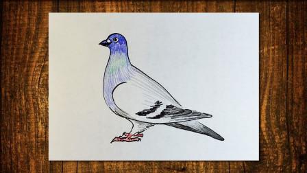 画鸽子1窦老师教画画
