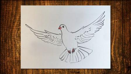 画鸽子2窦老师教画画
