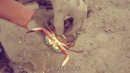 赶海发现了螃蟹的老巢,大脸盆才能把这些螃蟹装完