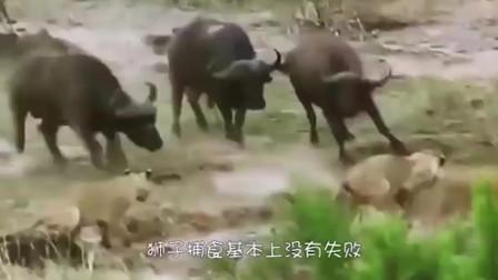 狮子直接咬住大象的脸,3秒后画风突变,网友:活该