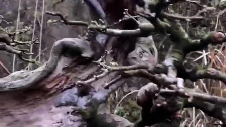 """""""人活一张脸树活一张皮"""",在沧桑中看到了生机,这才是盆景中的精品!"""