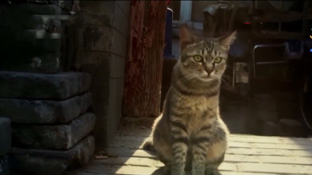纪录片推荐《我们的动物邻居》:实现人与自然的和谐发展