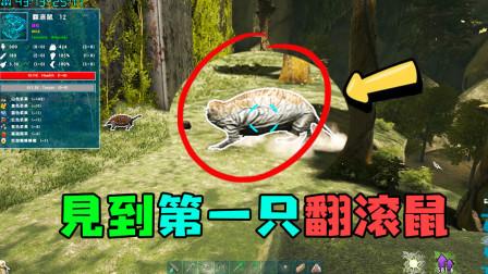 方舟生存进化之驯龙高手 来畸变见到的第一只翻滚鼠,你确定这不是车轮滚滚