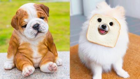 小狗-可爱和有趣的狗狗视频合集