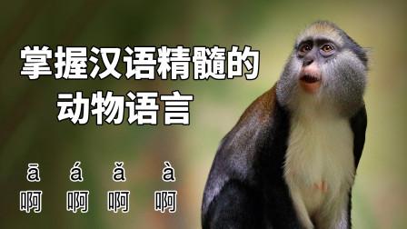 动物也会汉语的声调变化?仅次于人类的语言系统!