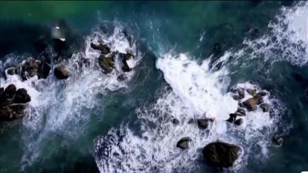 纪录片推荐:《蔚蓝之境》,讲述海洋生物故事,