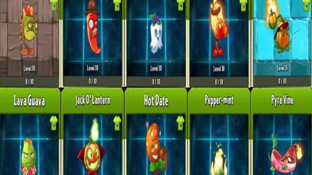 火焰系植物