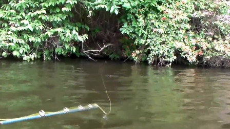 原来岸边的浮草下,才是大鱼出没的地方!