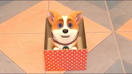 短腿小柯基:moco把自己当圣诞礼物送给yummy,这么可爱谁能拒绝