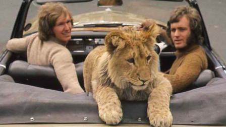 饲养员正和狮子玩的开心,下一秒意外发生,监控拍下这一幕