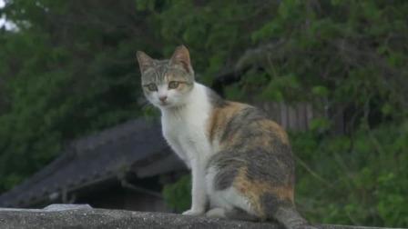 属于猫咪的世界,岛屿屋顶上的奇妙景观 捉喵记·岩合光昭的猫步走世界 20200515 快剪  0323033531