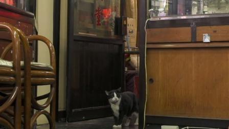 与店主人相处的其乐融融,对药材一发不可收拾的猫咪 捉喵记·岩合光昭的猫步走世界 20200515 快剪  0323034506