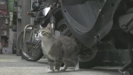 城市中的猫咪,独自寻找玩耍的东西 捉喵记·岩合光昭的猫步走世界 20200515 快剪  0323034507