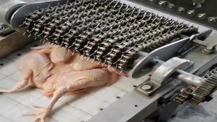 这广东食品厂的机器就是先进呀,这样切鸡省了很多人工