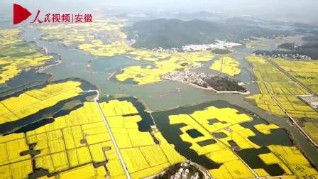 芜湖三山区: 响水涧油菜花海春意浓