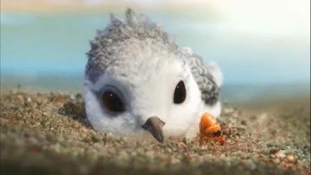 我是一只小小小小鸟,可是我怎么也捉不到小贝壳,小小鹬的成长